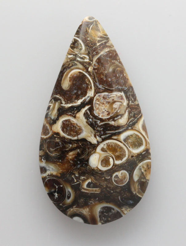 FOSSIL CORAL CABOCHONS